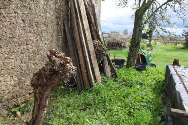 1chateau_lamery_willow_tree_for_ties