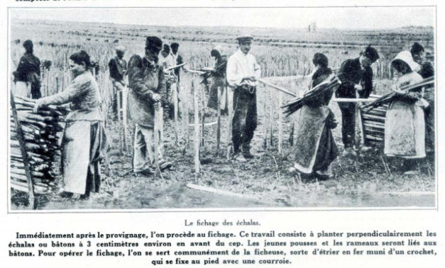 1champagne_1920s-2planting_posts