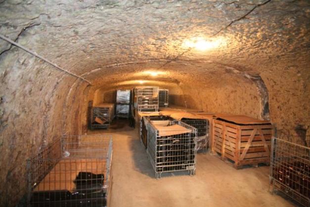 1noella_morantin_cellar_bottle_storage
