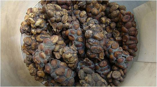 Καφές Kopi luwak.