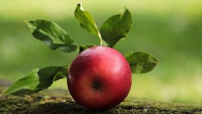 Φυσική διατήρηση των φρούτων